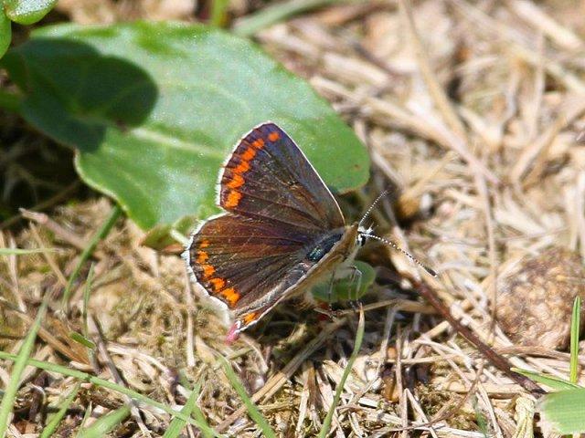 Sussex Wildlife Safari - Malling Down (07/08/18)