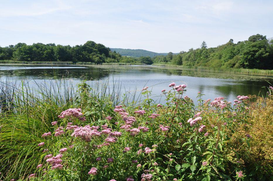 Burton mill pond©Robin CraneSussex Wildlife Trust