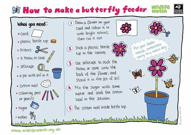 Butterfly feeder 800
