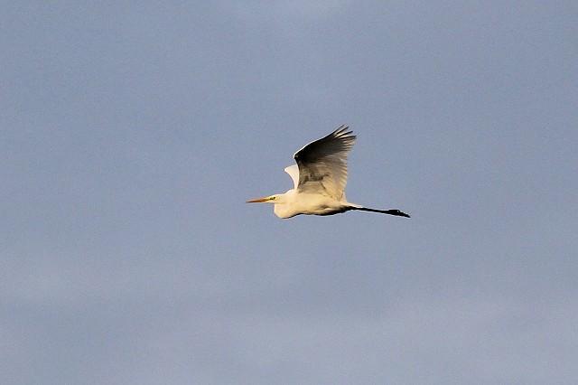 Sussex Bird Safari – Rye Harbour (15/11/19)