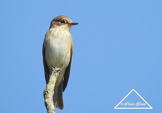 Sussex Half-Day Bird Safari – Steyning Downs