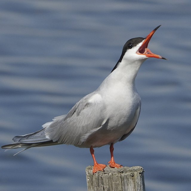 Discover Seabirds at Rye Harbour