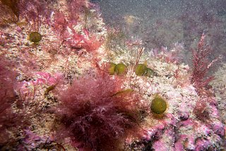 chalk reef