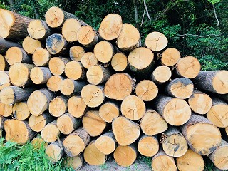 Coppiced chestnut logs