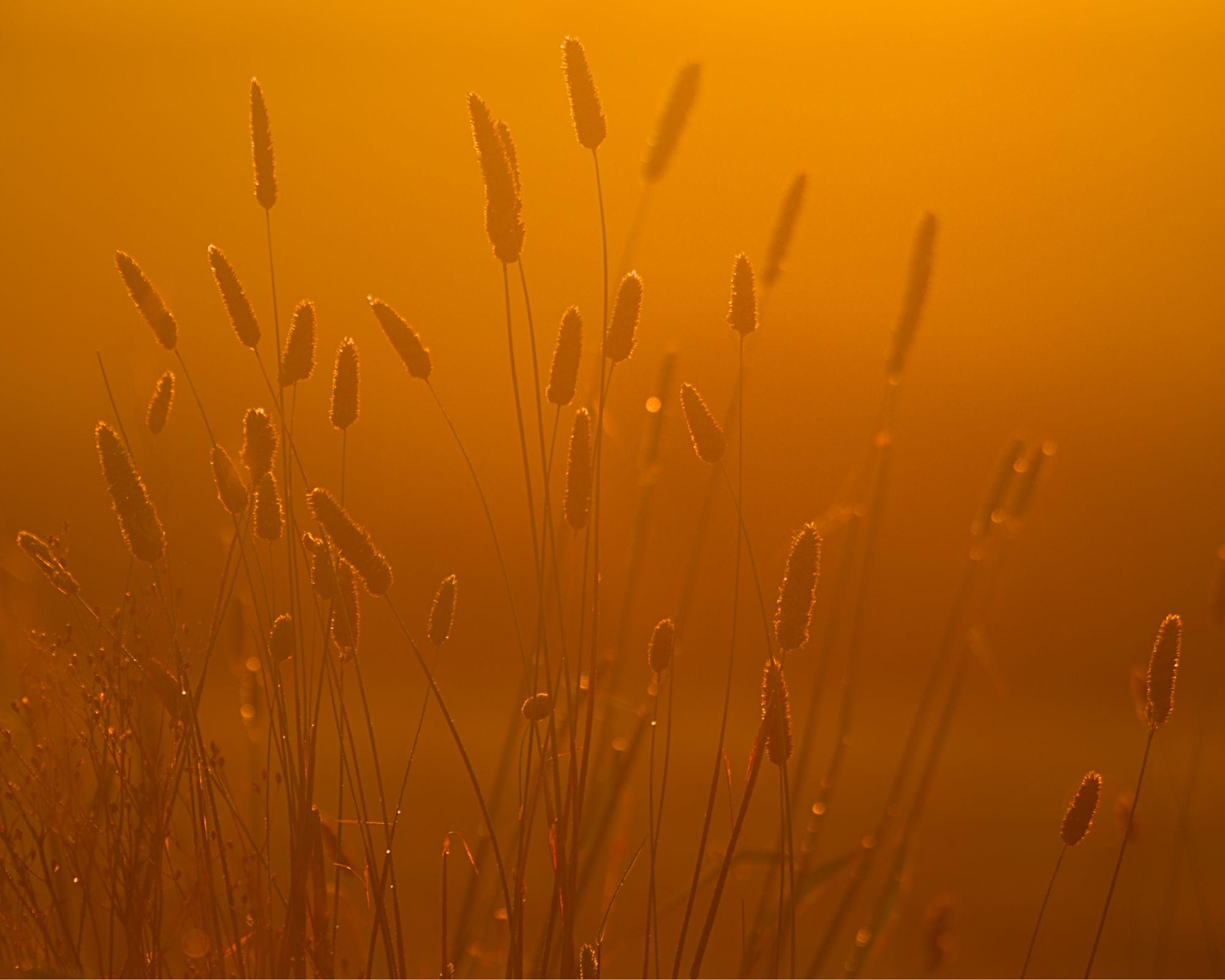 DSC0356 golden dawn 2000px x 1600px