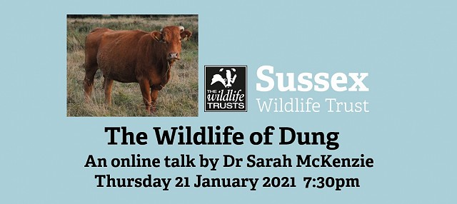 The Wildlife of Dung