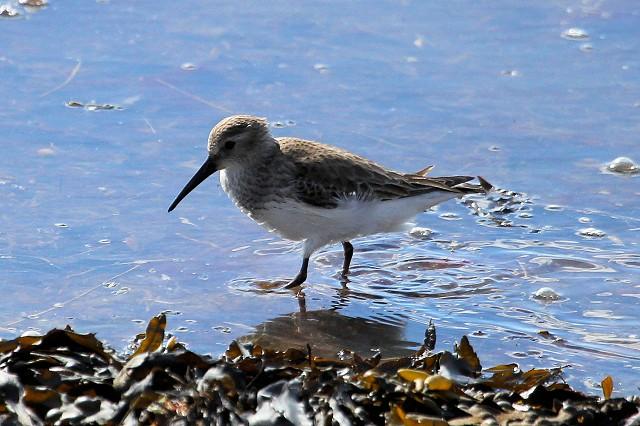Bird Safari – Pagham Harbour and Medmerry RSPB Reserves (3/5/19)