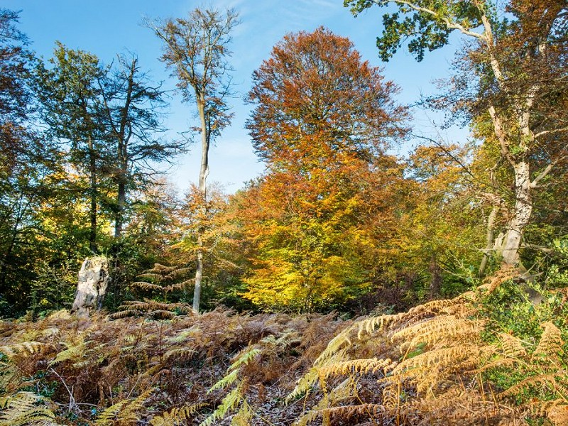 Breathing in ancient woodland