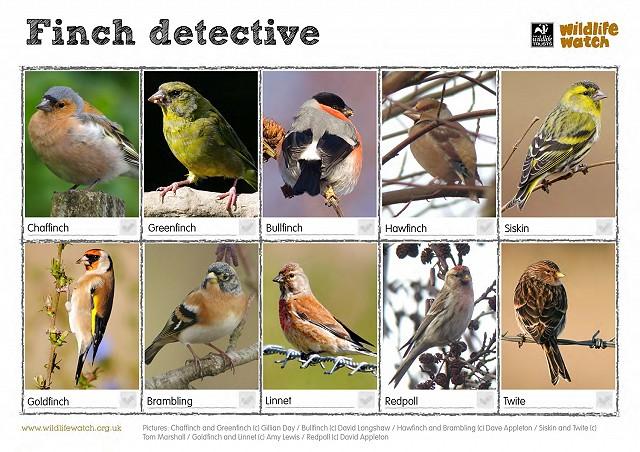 FinchSpotter
