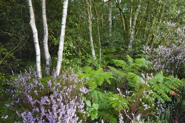 Flatropers Wood Wildlife Walk (08/05/19)