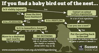 If you find a baby birds out of the nest