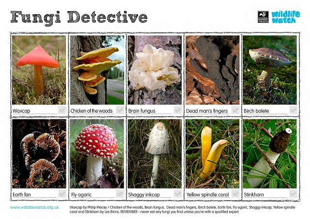 FungiDetective