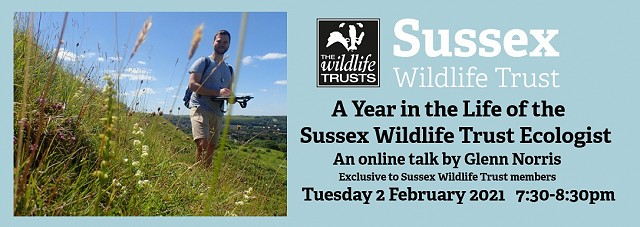 A year in the life of the Sussex Wildlife Trust Ecologist - Members Only talk