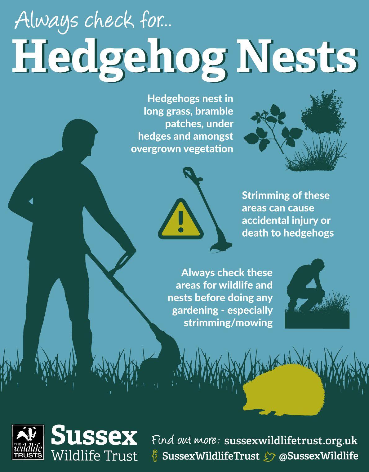 Hedgehog info