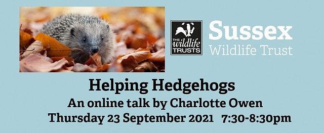 Helping Hedgehogs - online talk (23/09/21)