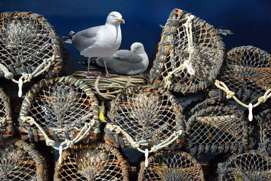 Herring gulls©Alan Price, Gatehouse StudioSussex Wildlife Trust