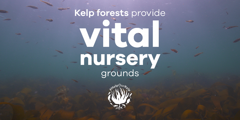 Vital nursery grounds
