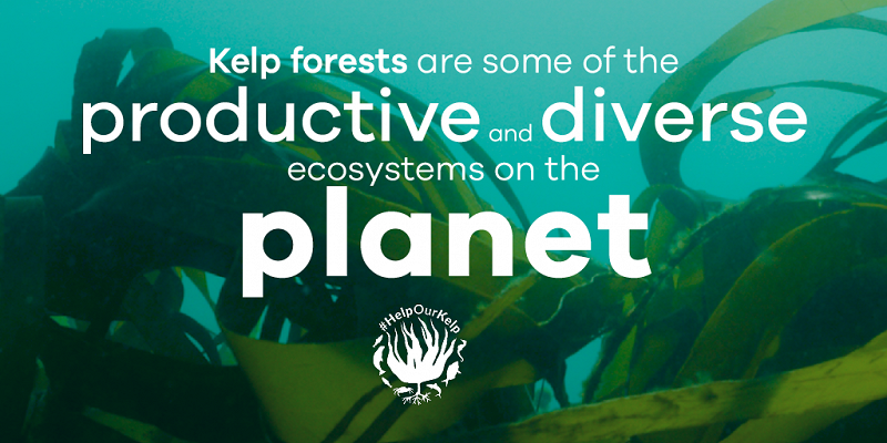 Productive and diverse ecosystem