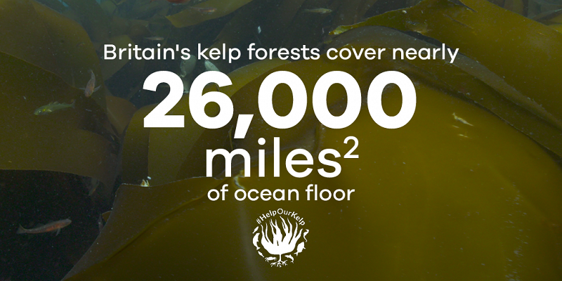 Britain's kelp forests