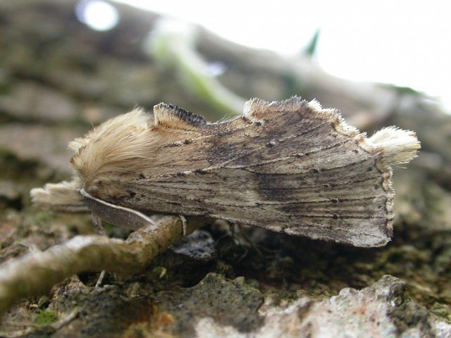 An Introduction to Moths and Moth Trapping (22/06/18)