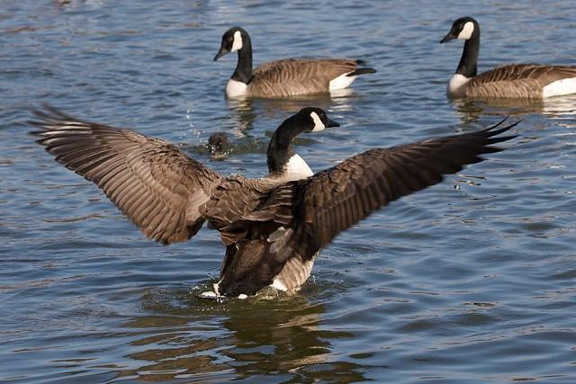 Sussex Half Day Bird Safari - Cuckmere Haven and Seaford Head (21/11/18)