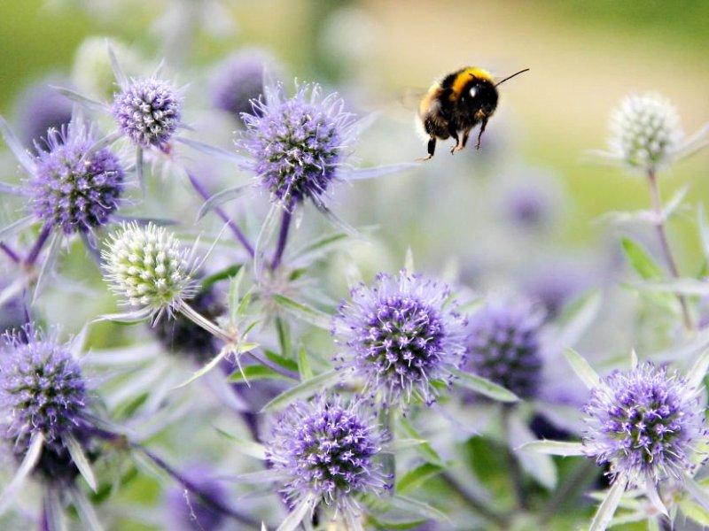 Bee creative in the garden