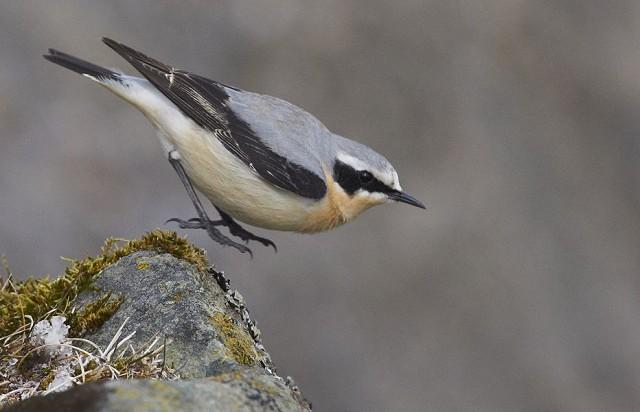 Sussex Half Day Bird Safari (26/09/18) - Kithurst Hill, nr Storrington