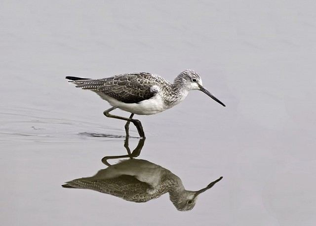 Sussex Half Day Bird Safari - Chidham, Chichester Harbour (19/10/18)
