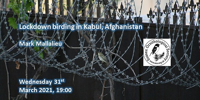 Lockdown birding in Kabul, Afghanistan