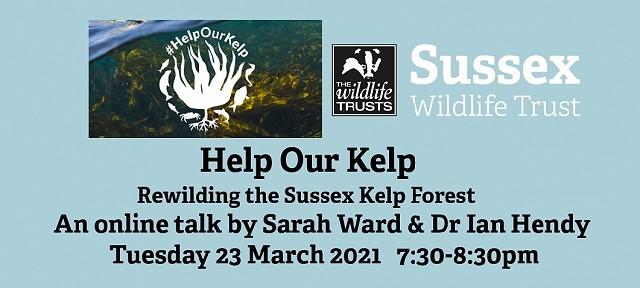 Help Our Kelp: Rewilding the Sussex Kelp Forest
