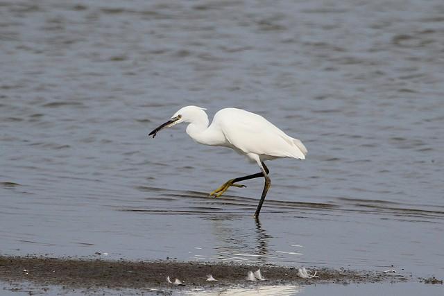 Sussex Half Day Bird Safari - Fishbourne Creek (5/2/19)