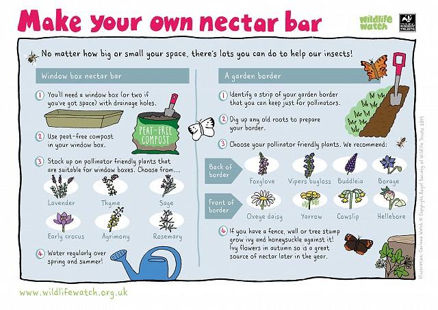 Make a nectar bar 800