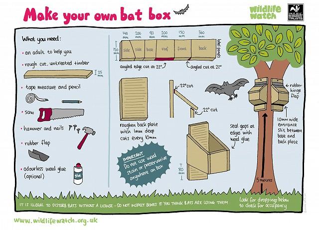 Make your own bat box(1) 800
