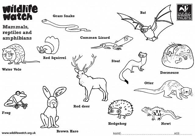 Mammals reptiles and amphibians