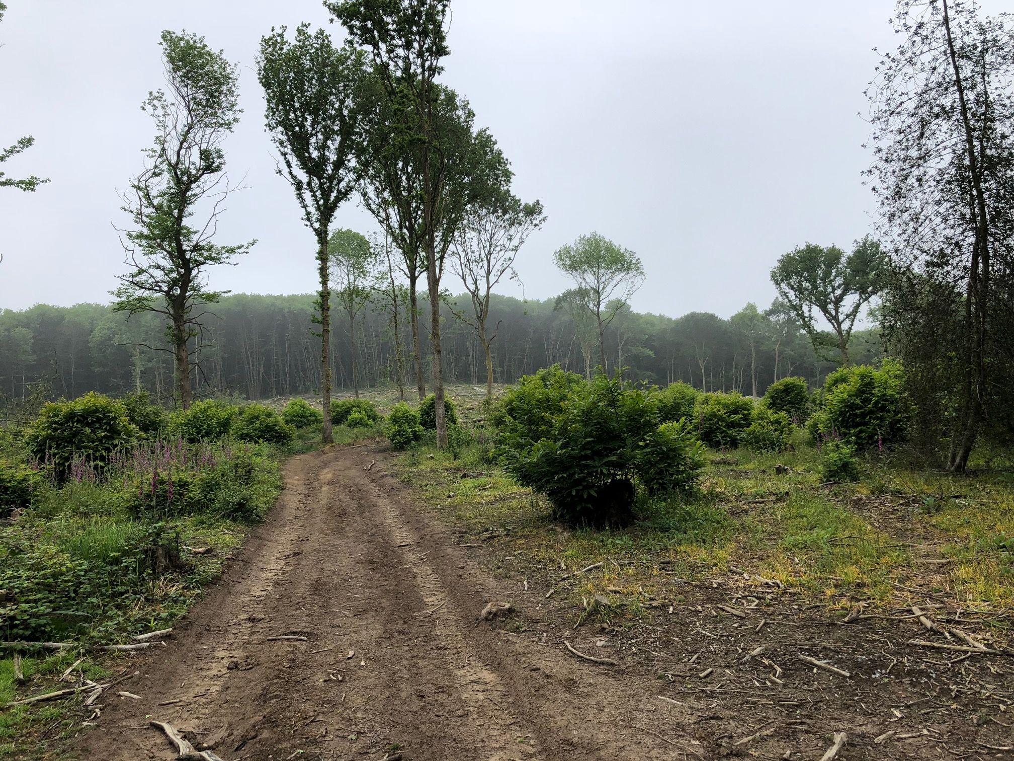 Maplehurst Wood 2 (c) Inwood Developments