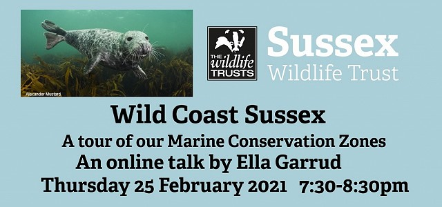 Wild Coast Sussex: A Tour of our Marine Conservation Zones
