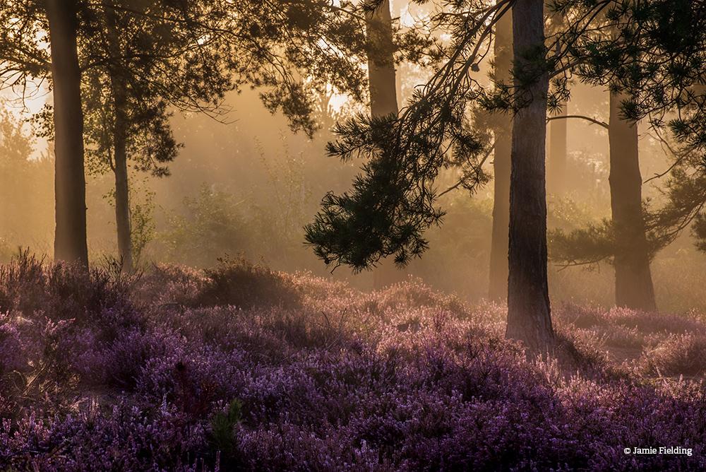 Morning Glory JamieFielding