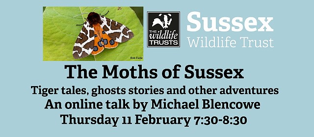 The Moths of Sussex