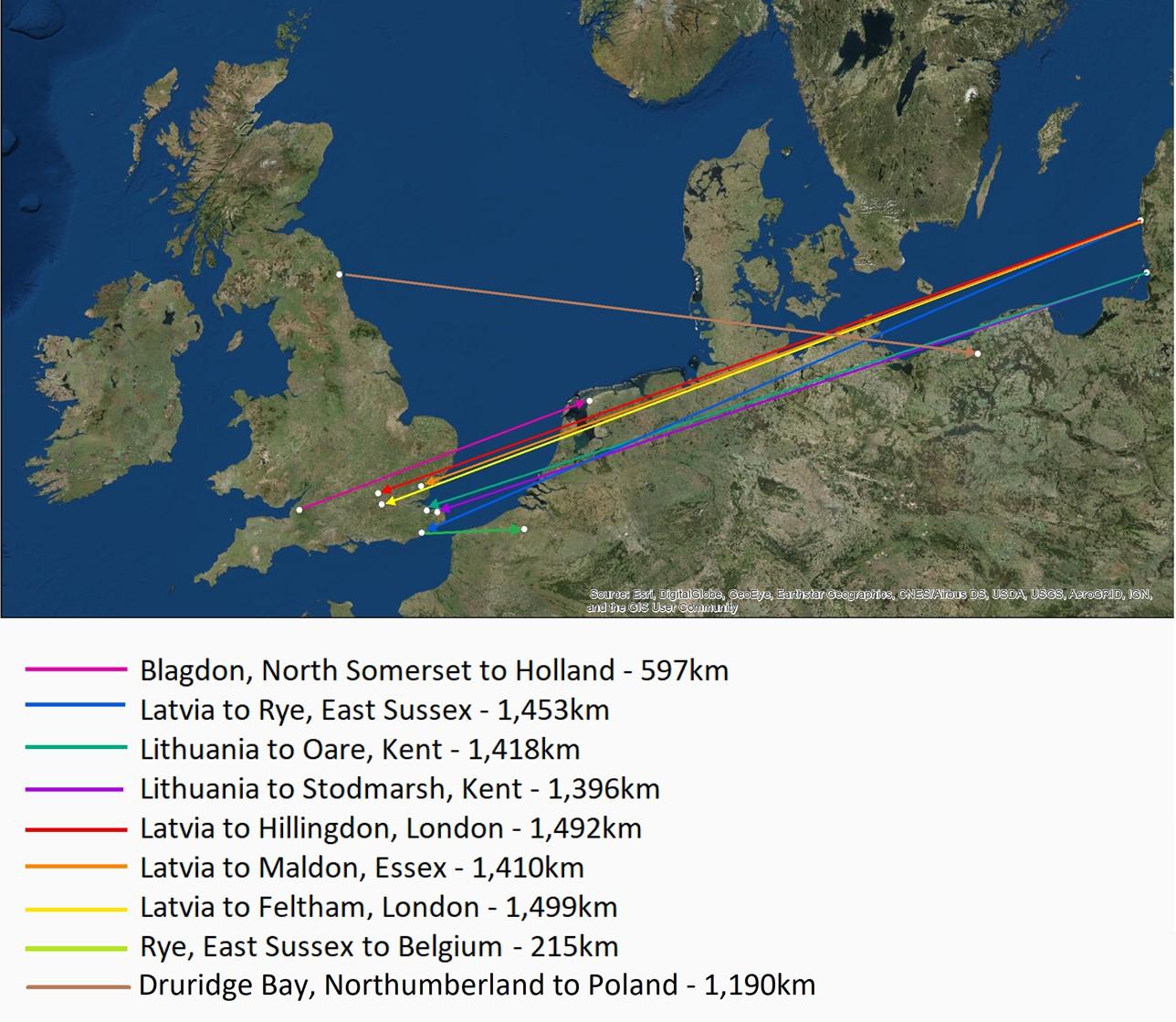 Nathusius migration