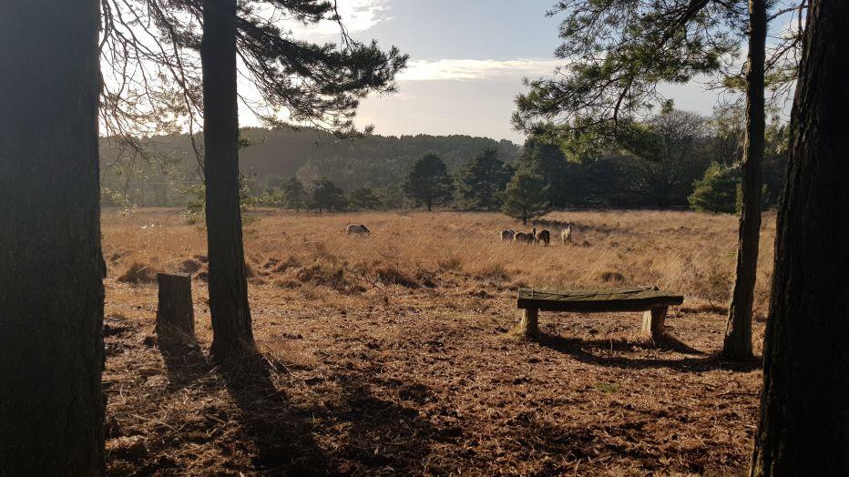 Old Lodge Nature Reserve©Sam RobertsSussex Wildlife Trust