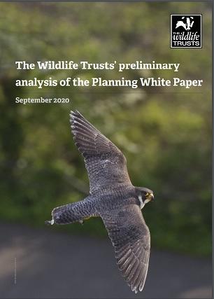 Planning White Paper