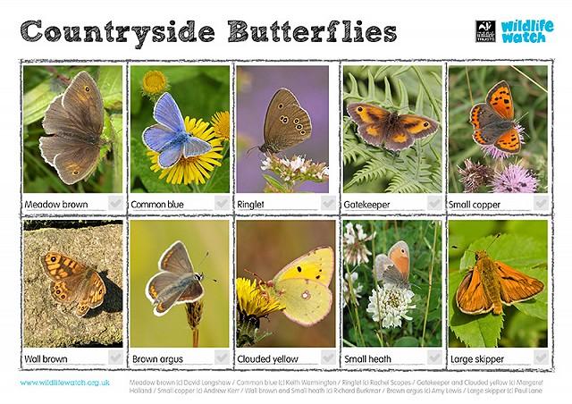 Countryside butterflies 800