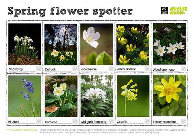 Spring flowers 800