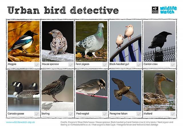 Urban birds 800