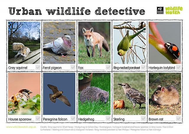 Urban wildlife 800