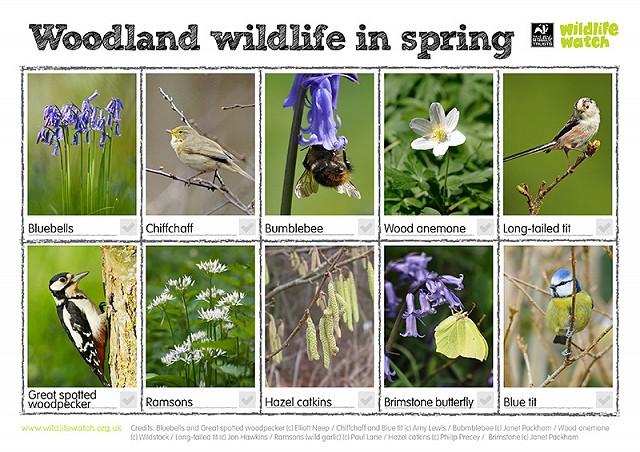 Woodland wildlife (spring) 800