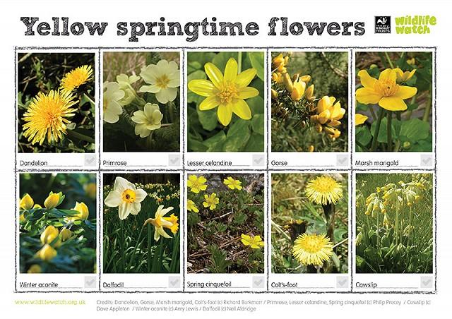 Yellow springtime flowers RGB 800