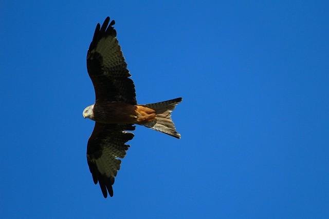 Sussex Half Day Bird Safari - West Dean Woods (22/3/19)