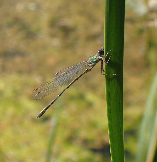RxWillow emerald 170919