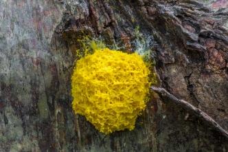 Scrambled egg slime (c) Derek Parker